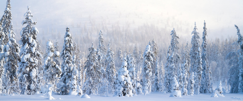 Winnaars ruilvakanties met Lapland zijn bekend