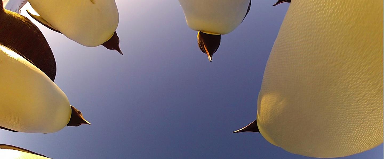 Kijktip: natuurserie Pinguïns Undercover op Nederland 1
