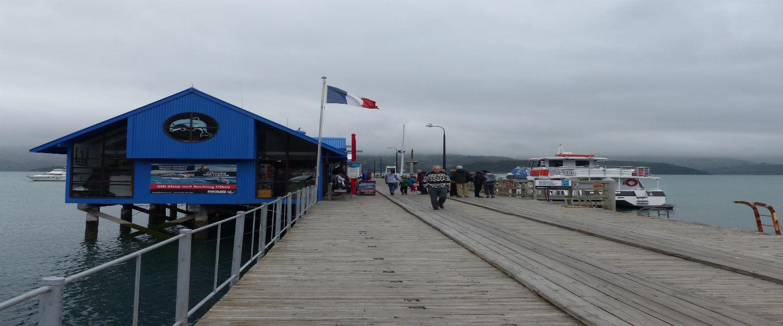 Dag 19: Naar Christchurch met een detour naar Akaroa