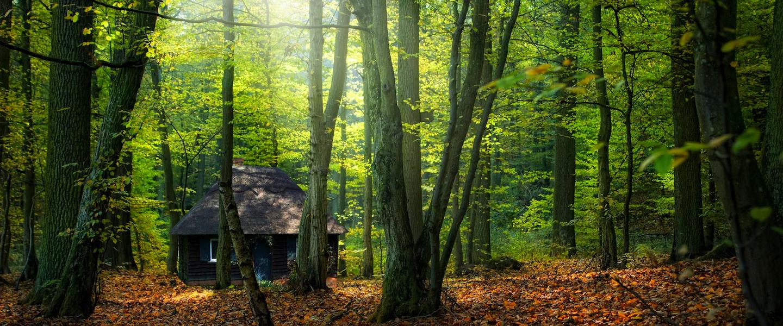 De natuur als extraatje in je weekendhuis