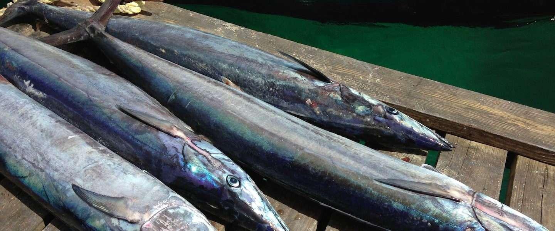 Vissen bij A La Plancha aan de Maas