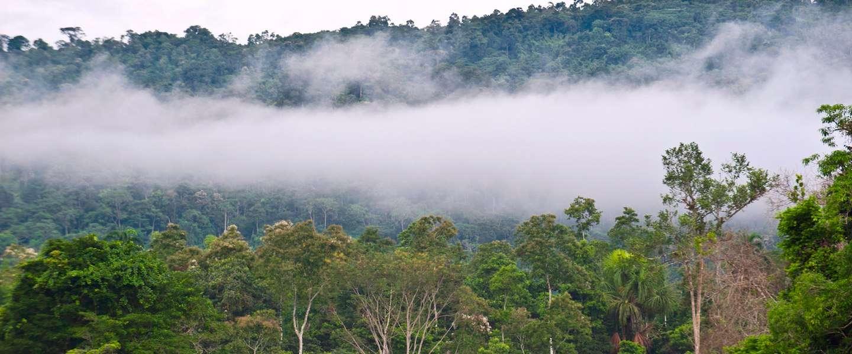 Ziplinen door de Amazone met Google Street View