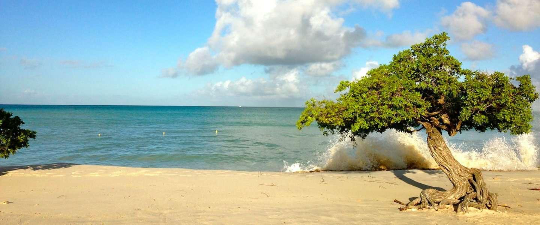 Aruba wordt culinair aantrekkelijker - In het midden eiland grootte ...