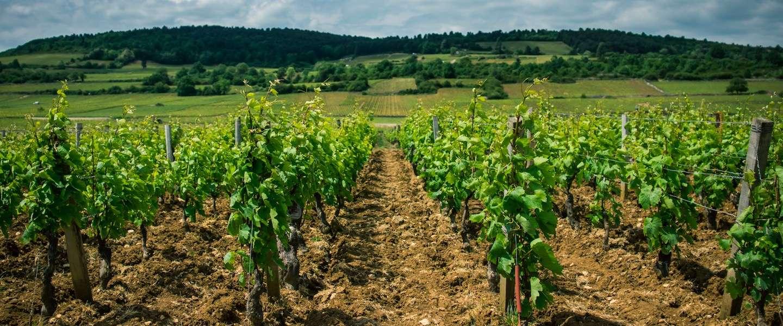 11 dingen die je nog niet wist over de Bourgogne