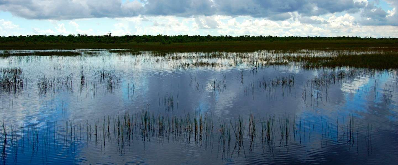 Krokodillen spotten in natuurpark Everglades National Park in Florida