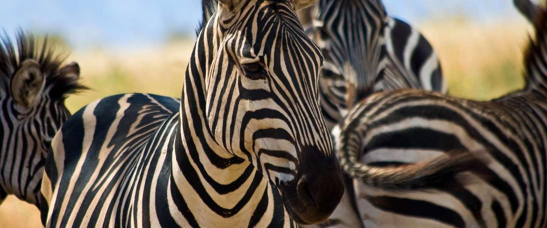 Fotograferen van wildlife: 10 tips