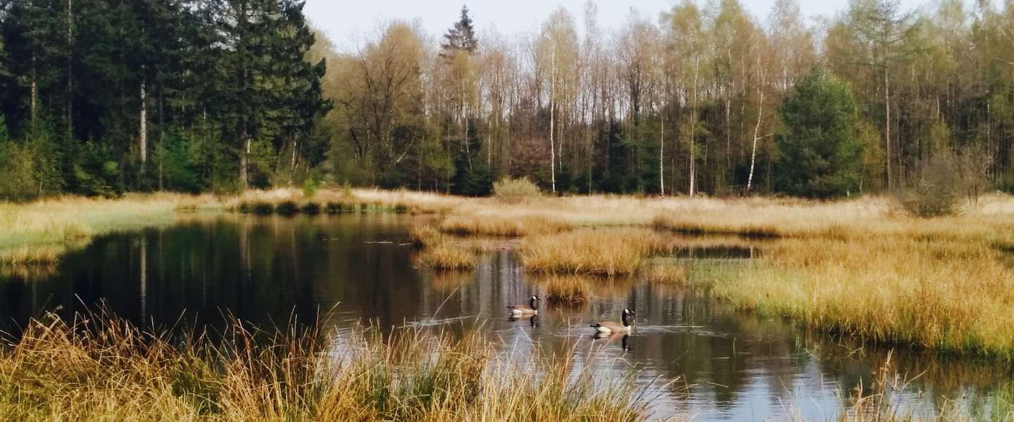 'Into the Netherlands' in Drenthe