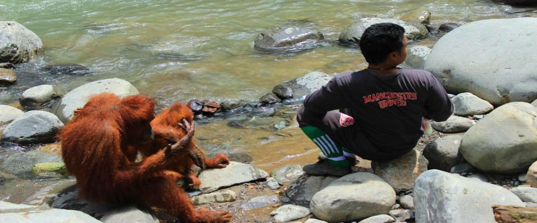 Het geheim van Indonesië: welkom in Bukit Lawang!