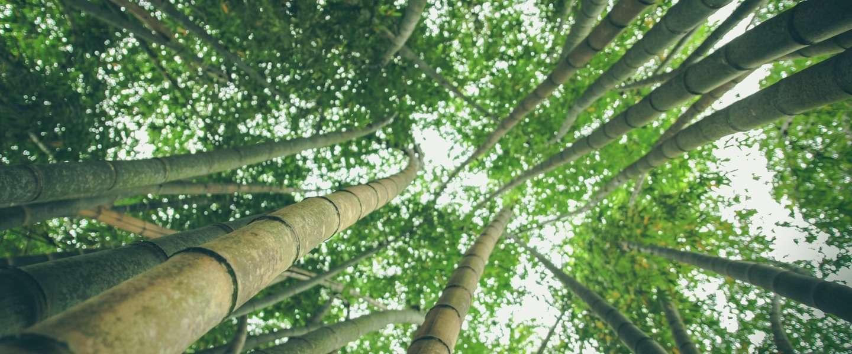 Goed voor de natuur, kleding gemaakt van bamboe