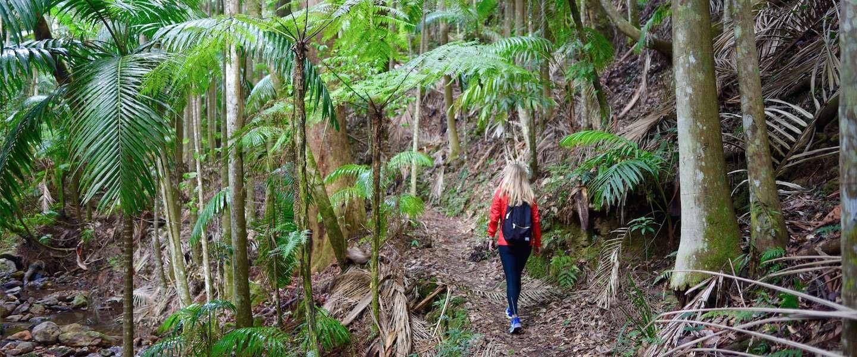 Hiken in Lamington National Park