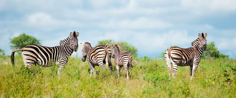 De mooiste nationale parken van Zuid-Afrika