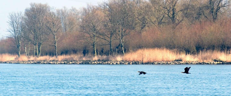 25 bijzondere natuurgebieden in Nederland in Street View
