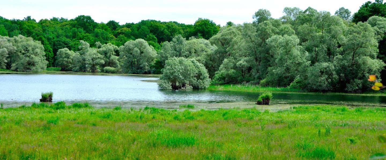 Natuurpark Forêt d'Orient is een paradijs voor natuurliefhebbers