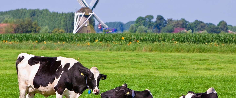 Top 10 meest vreemde plaatsnamen van Nederland