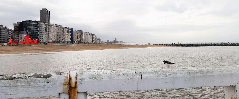 Winters uitwaaien in Oostende