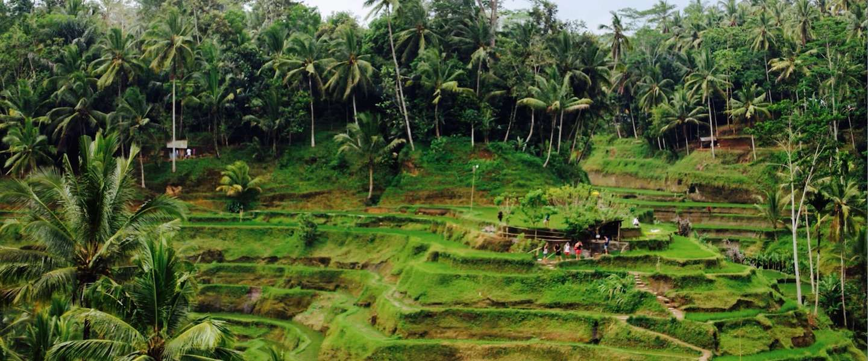 De 5 coolste dingen om te doen in en rond Ubud