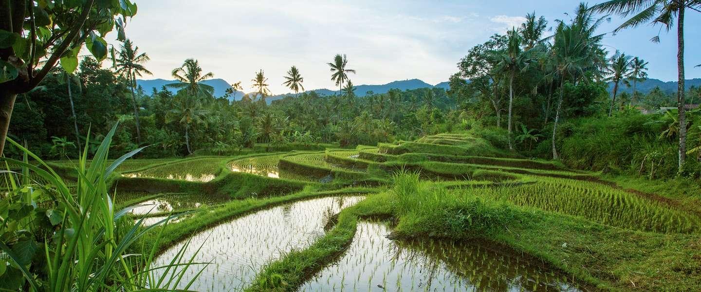 3 watervallen die je wilt zien op Bali