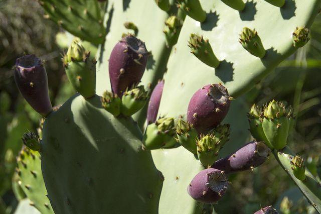 mediterraan_eten_grieks_cactus