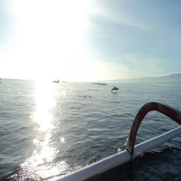 dolfijnen_Lovina
