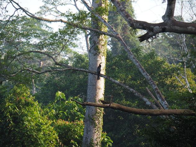 25. Tabin wildlife reserve