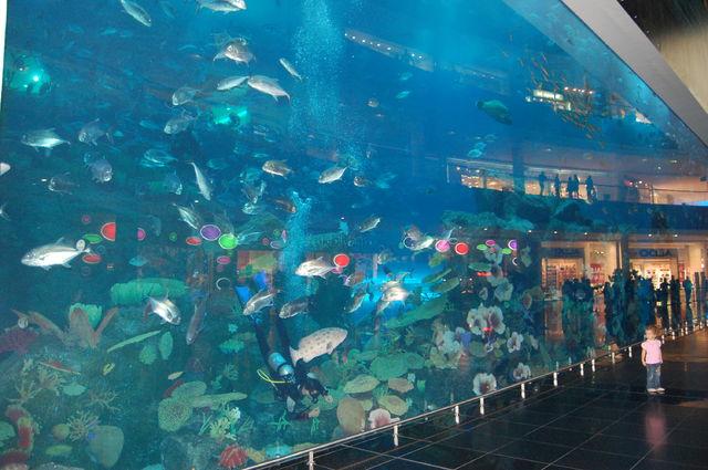 fotoalbum_dubai_aquarium_mall