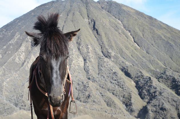 29-paard-bromo