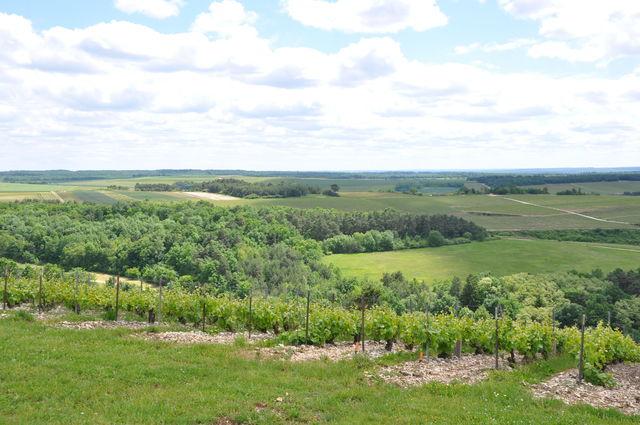 uitzicht-wijngaarden-champagnestreek