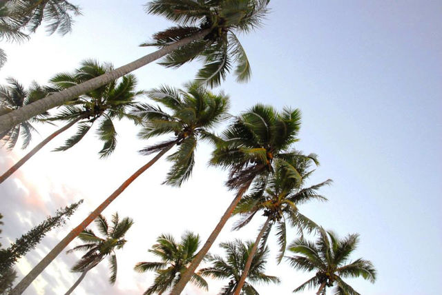 lucht_palmbomen_nieuw_caledonie
