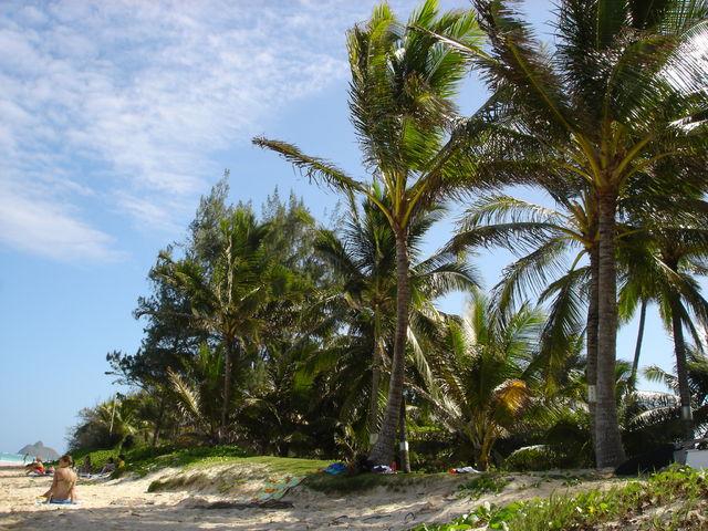 palmbomen_lanikai_hawaii