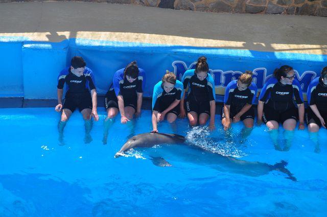 benidorm_mundomar_dolfijnen