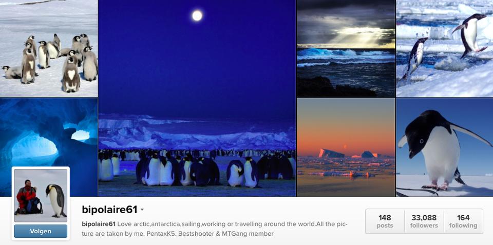 instagram-pinguins