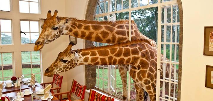giraffe_manor_rothschild