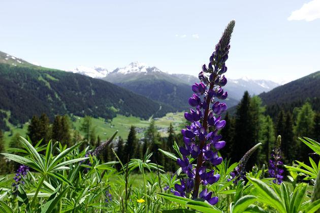 alpen-zwitserland-5
