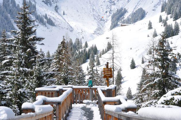 baumzipfelweg-winter