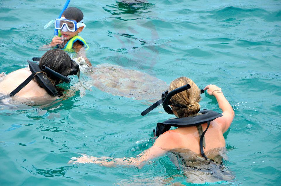 barbados_zwemmen_zeeschildpadden