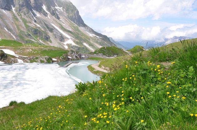 bloemen-bergen-vorarlberg