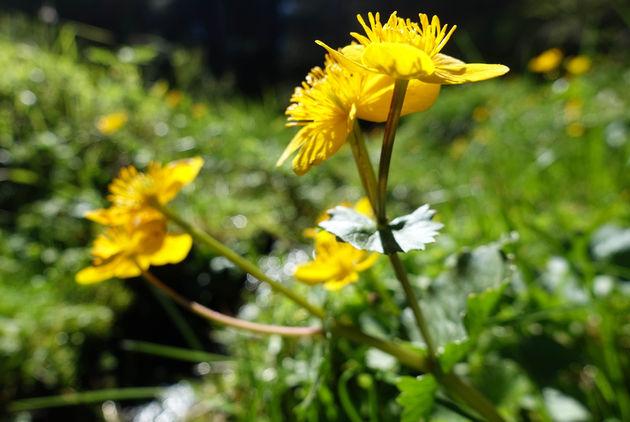 bloemen-graubunden