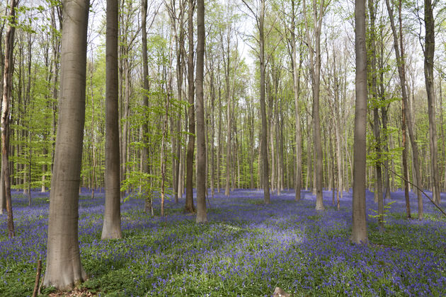 blue-forest-halle