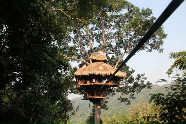 boomhut-gibbon-experience
