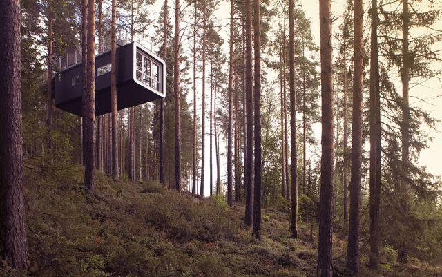 cabin_treehotel