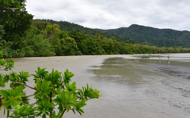 cape-tribulation-strand