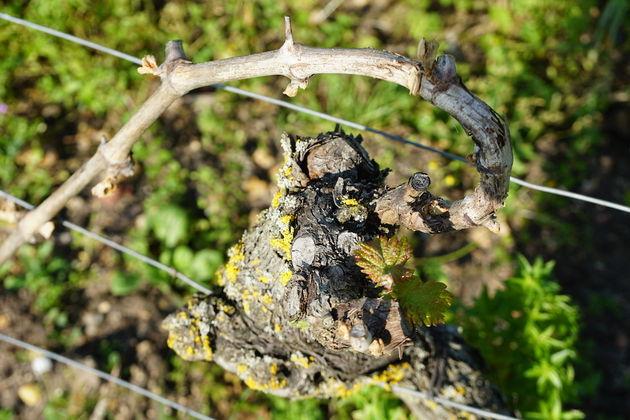 Château_de_Minière_wijn