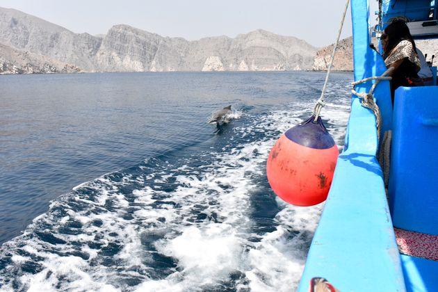 dhow-cruise-musandam-dolfijnen