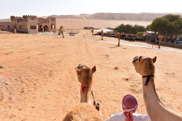 dromedaris-oman-woestijn
