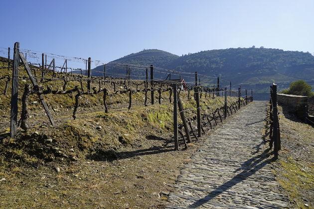 douro_vallei_portugal_wijnrank