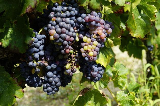 Le_Pays_Vaison_Ventoux_wijn_1