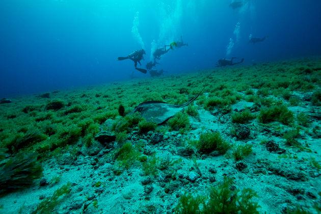 duiken-fernando-de-Noronha