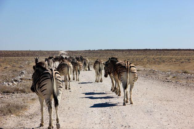 etosha-namibië