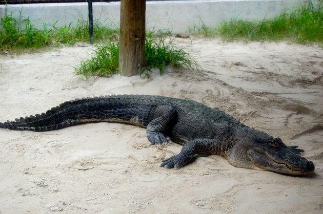 everglades_florida_krokodil_safari_park