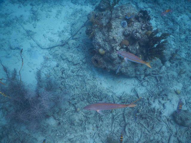 onderwaterfoto's_nikon_vissen